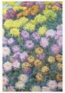 Claude Monet (1840-1926)  -  Massif De Chrysanthemes - Postcard -  A13478-1