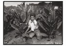 Lewis Hine(1874-1940)  -  Child Labor (Boy & Tobacco Plants) - Postcard -  A16757-1