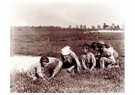 Lewis Hine(1874-1940)  -  Cranberry Pickers, 4 Yrs. & 7 Yrs. Old - Postcard -  A16766-1