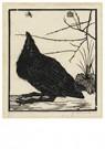 Jan Mankes (1889-1920)  -  Kraai, omhoog kijkend naar een muggetje, 1918 - Postcard -  A75808-1