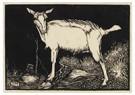 Jan Mankes (1889-1920)  -  Witte geit, staand naar links, 1915 - Postcard -  A79501-1