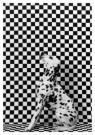 Gert Weigelt (1943)  -  Dalmatian - Postcard -  B0808-1