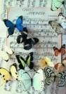 Letizia Volpi  -  Song of Spring - Postcard -  C2228-1